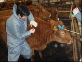 Tests on Livestock Products and Common Diseases